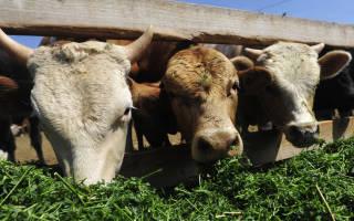 Развитие скотоводства в России