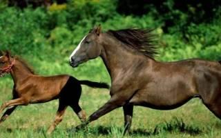 Лошади России: поголовье, стоимость, особенности