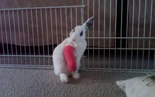 Падёж кроликов: самые частые причины
