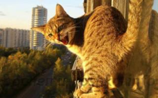 Что делать, если кот упал