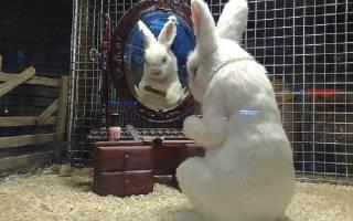 Жидкий кал у кроликов: диагностика заболеваний