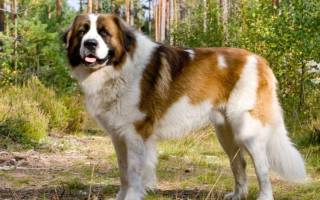Породы уличных собак
