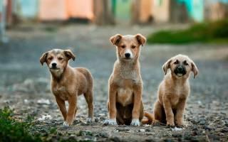 Мокнущий лишай у собак