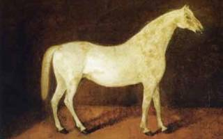 Сколько стоит самая дорогая лошадь в мире