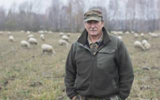 Овцеводство как бизнес в Беларуси