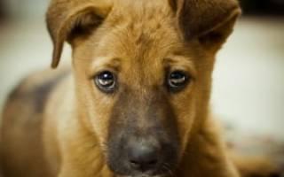Как отучить взрослую собаку гадить дома
