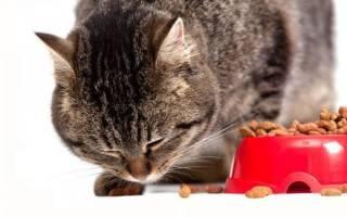 Каким должно быть питание кошек при панкреатите