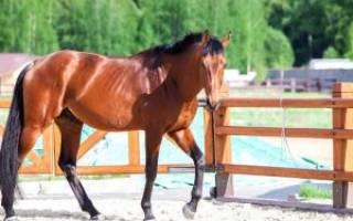 Содержание лошади в домашних условиях: лошади на даче