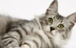 Для чего нужны кошки в доме