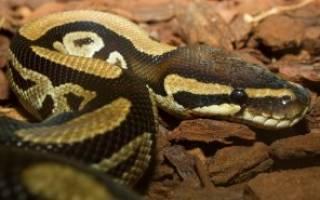 Сколько живут змеи в природе и в неволе
