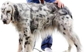 Выбираем механическую машинку для стрижки собак