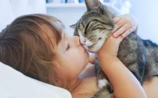 Как лечат кошки