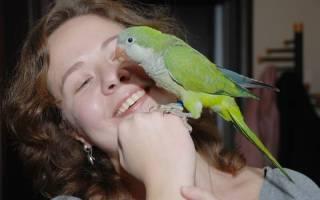 Какого попугая легче научить говорить: сравнение пород