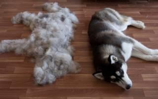 Собака линяет: что делать, чтобы уменьшить выпадение шерсти