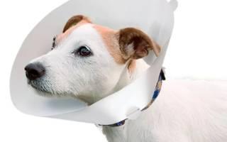 Чем кормить собаку после операции