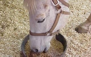 Правильное кормление лошадей: полезные советы