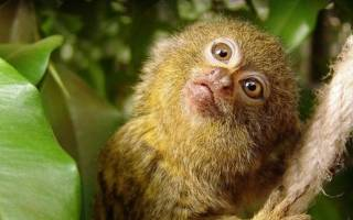 Животные, живущие в тропическом лесу