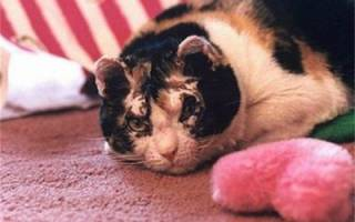 Чем можно кормить кастрированного кота