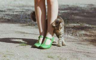 Что любят кошки: привычки питомцев