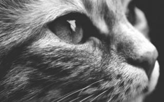 Как правильно похоронить кошку