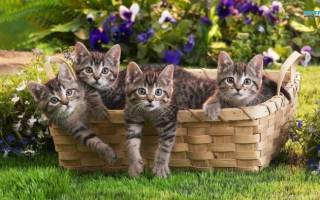 Куда можно пристроить котят