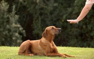 Как правильно дрессировать собаку
