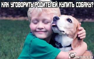 Как попросить собаку у родителей
