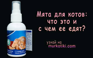 Вред и польза от кошачьей мяты