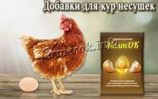 Самые полезные кормовые добавки и витамины для кур: рейтинг