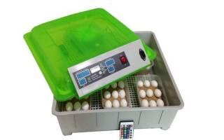 Выбор инкубатора: сколько стоит инкубатор для кур