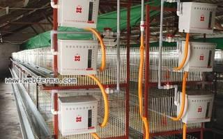 Содержание кур на птицефабрике: система содержания