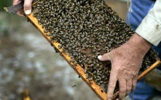 Как делать отводки пчел: ранние весенние отводки