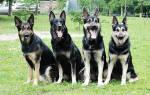 Как организовать питомник собак