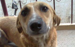 Почему собака прижимает уши