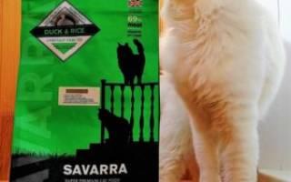 Обзор корма Savarra для кошек