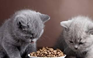 Чем кормить котенка 7 месяцев: взрослый корм VS детский