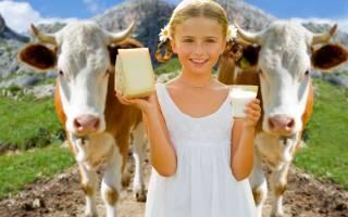Сколько корова дает молока: нормы и рекорды