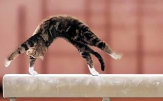 Как научить кошку командам