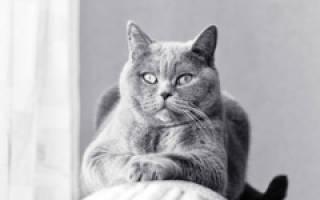 Как отучить кошку драть диван