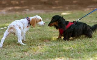 Как научить собаку не бояться
