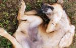 Почему собака выгрызает шерсть