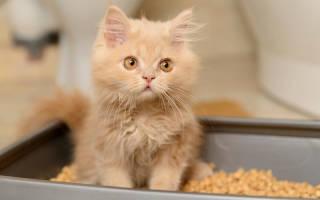 Запор у котенка: симптомы и профилактика