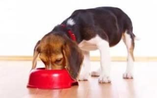 Как варить еду собаке