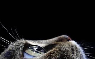 Кошка чихает и слезятся глаза, что может быть причиной, лечение
