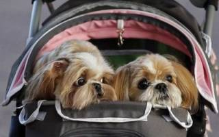 Правила вывоза собак за границу