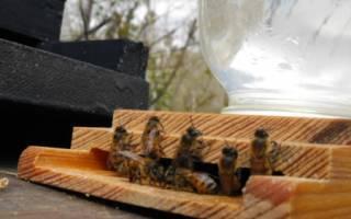 Самодельная поилка для пчел: инструкция