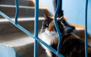 Чем отпугнуть кошек, чтобы не гадили в подъезде