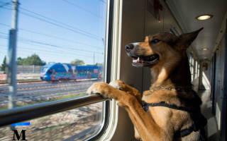 Как везти собаку в поезде