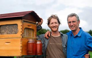 Пчеловодство как бизнес: рентабельность