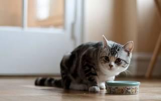 Чем лечить и кормить кошку при почечной недостаточности